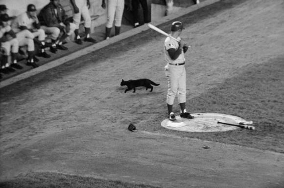 Santo & the Cat, 1969